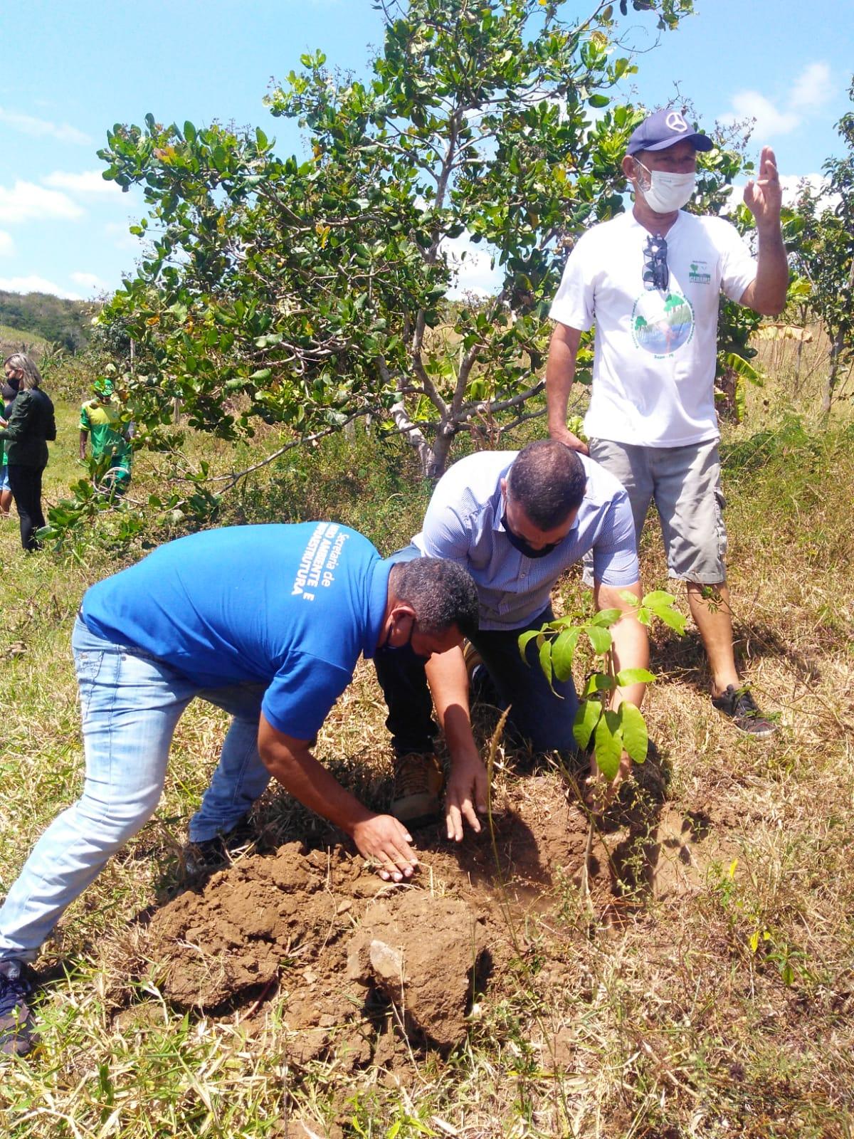 Dia da Árvore: Prefeitura planta mudas e elabora plano de arborização para Sapé